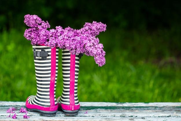 Fleurs lilas dans des bottes en caoutchouc à rayures. composition printanière créative.