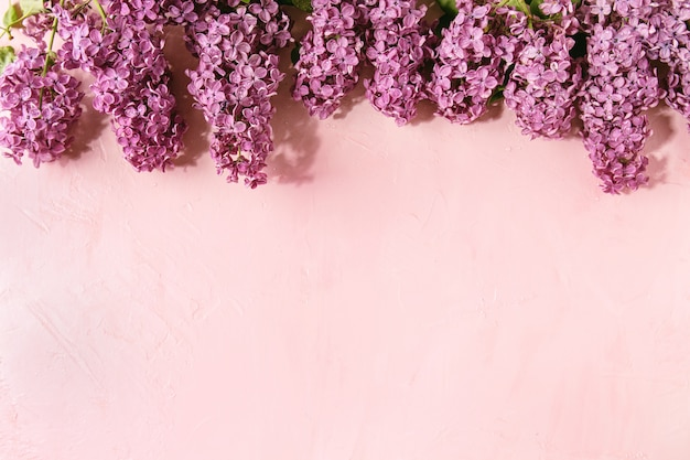 Fleurs lilas sur rose