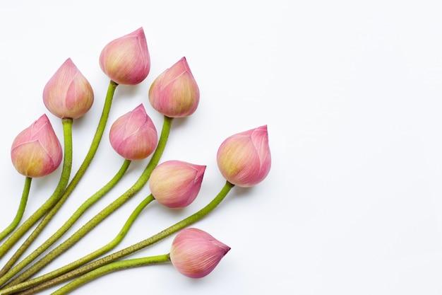 Fleurs de lotus sur blanc.