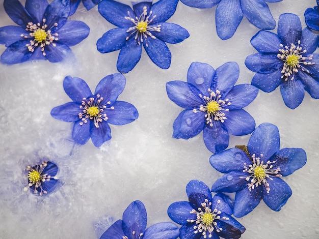 Fleurs lumineuses couchées dans la glace