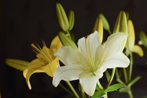 Fleurs de lys blancs