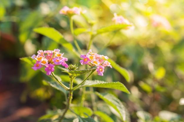 Fleurs magnifiques avec la lumière du soleil avec un arrière-plan flou