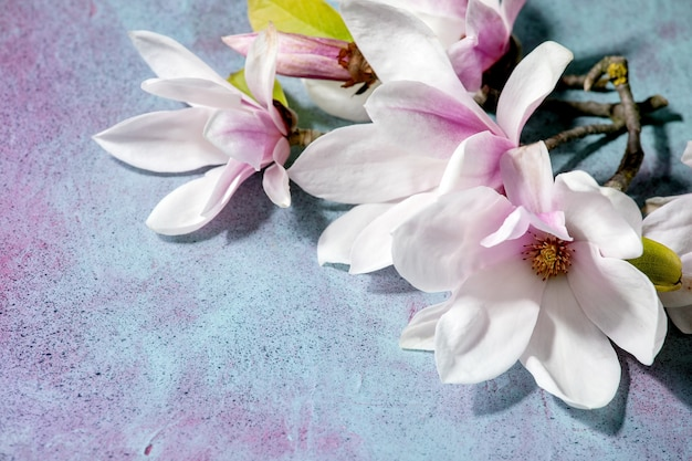 Fleurs de magnolia avec des feuilles
