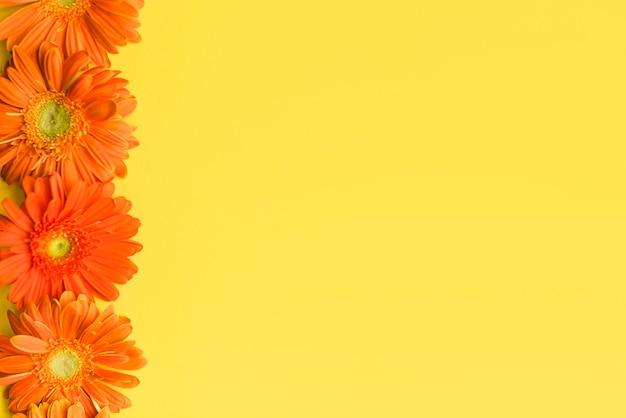 Fleurs de marguerite colorées décoratives sur un fond