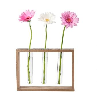 Fleurs de marguerite dans des éprouvettes