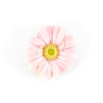 Fleurs de marguerite