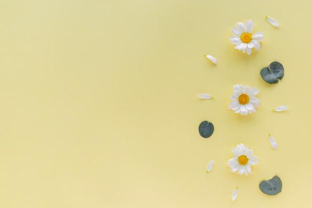 Fleurs de marguerites blanches; pétale et feuille sur fond jaune avec fond
