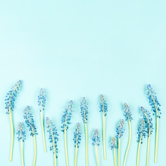Fleurs de mascara en bas sur fond bleu