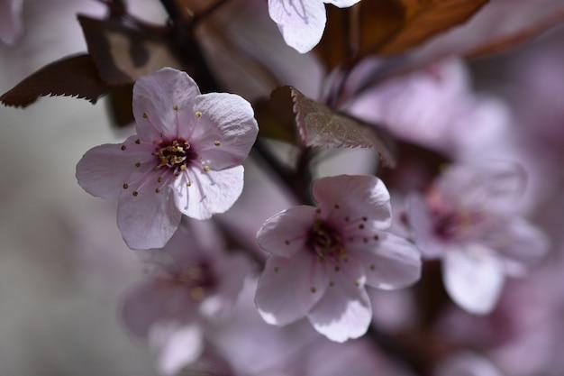 Fleurs avec mouchetures