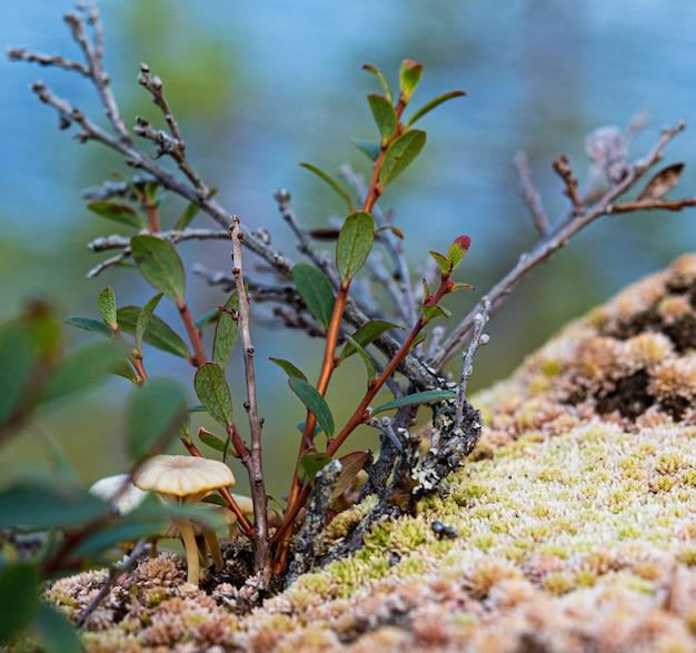 Fleurs, mousse et champignon sur un rocher de montagne