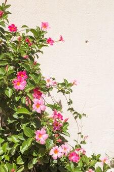 Fleurs sur le mur blanc