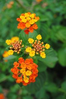 Fleurs namibien