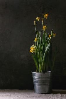 Fleurs narcisses jonquilles