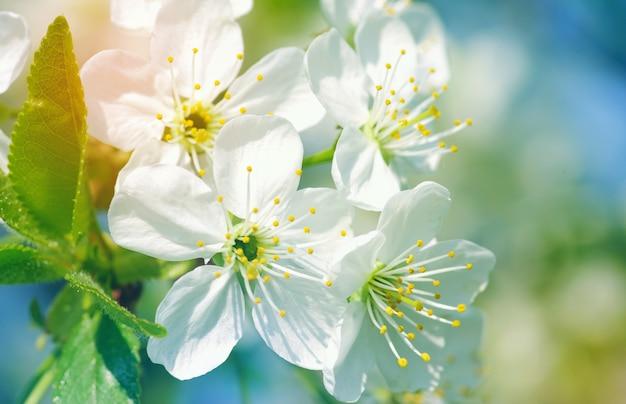 Fleurs sur nature floue