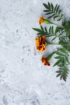 Fleurs naturelles velours, surface. cadre avec arrangement floral. vue de dessus, plat poser.