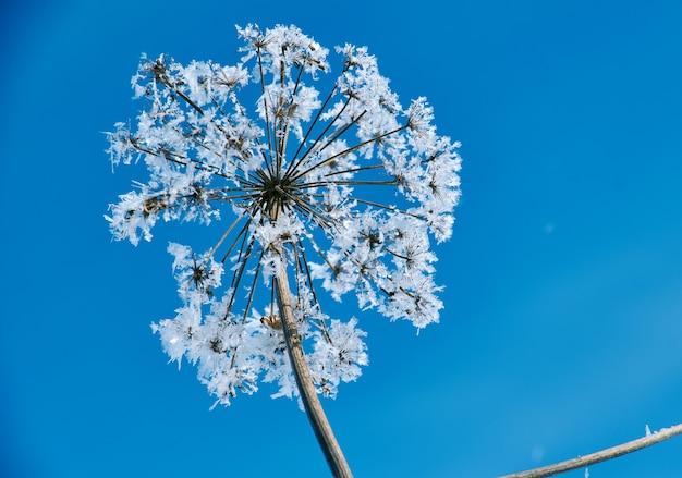 Fleurs de neige en cristal contre le ciel bleu. merveille d'hiver des cristaux de la nature du gel. paysage de scène d'hiver