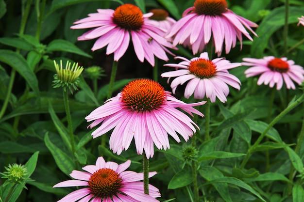 Fleurs à new york, états-unis