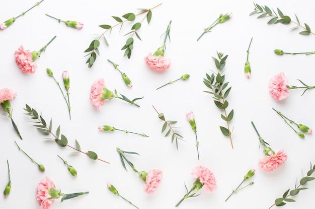 Fleurs d'oeillet rose sur fond blanc. à plat, vue de dessus.