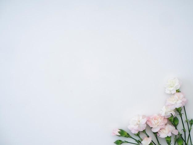 Fleurs d'oeillets sur fond blanc