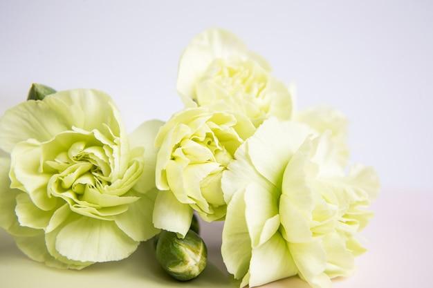 Fleurs d'oeillets jaunes verts sur fond lilas blanc. place pour le texte. fête des mères. carte de voeux. jour de mariage. la saint-valentin.