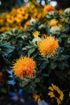 Fleurs orange dans le jardin