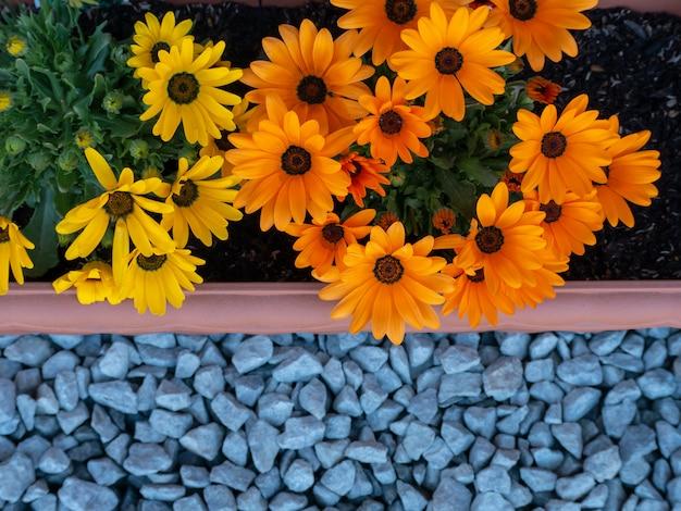 Les fleurs orange et jaunes dans le pot sur le sol rocheux