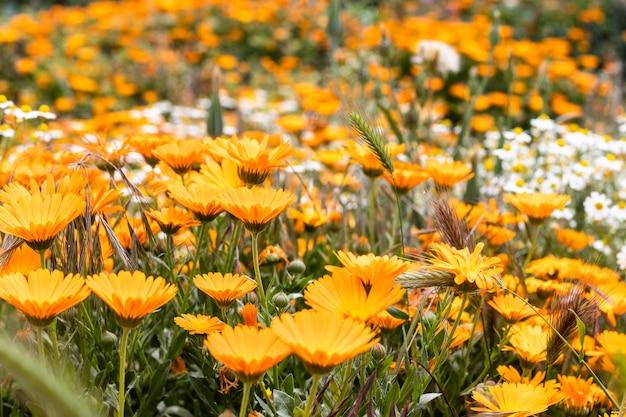 Fleurs oranges, fond orange. fond de nature