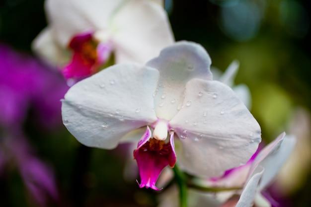 Fleurs d'orchidée rose sur fond de feuilles. prise de vue horizontale