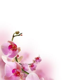 Fleurs d'orchidées, belle bordure florale