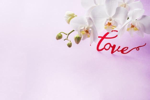 Fleurs d'orchidées blanches sur fond rose. concept saint valentin