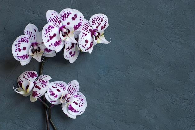 Fleurs d'orchidées blanches sur une surface gris foncé