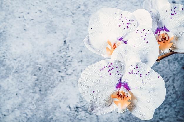 Fleurs d'orchidées sur une branche contre un mur de stuc, maquette