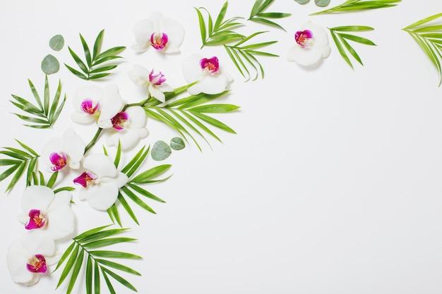Fleurs d'orchidées et feuilles vertes sur fond blanc