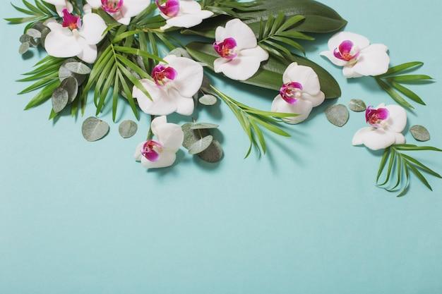 Fleurs d'orchidées et feuilles vertes sur fond de papier de couleur menthe