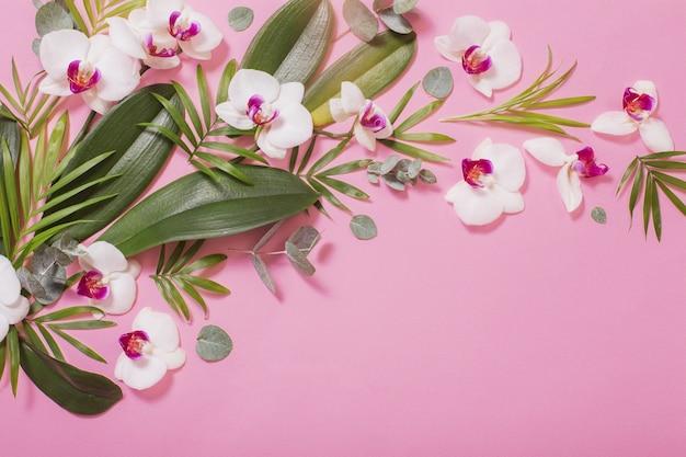 Fleurs d'orchidées et feuilles vertes sur fond de papier rose