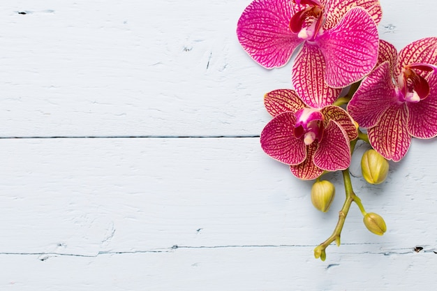 Fleurs d'orchidées roses sur une surface en bois. surface d'orchidée.