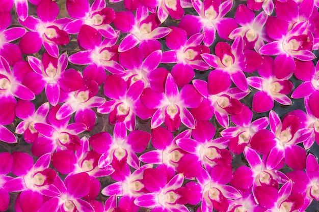 Fleurs d'orchidées roses sur la surface de l'eau se bouchent, utilisez pour l'image de fond.