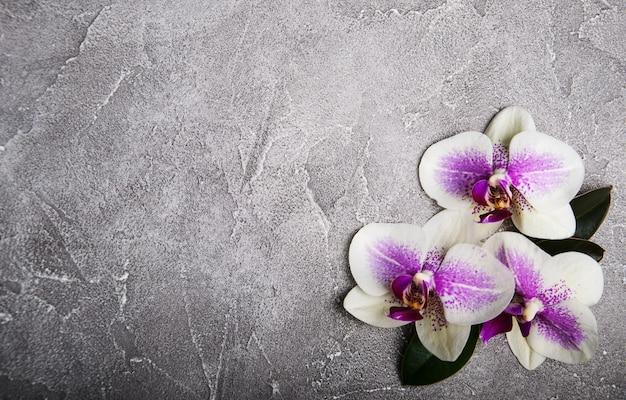 Fleurs d'orchidées roses