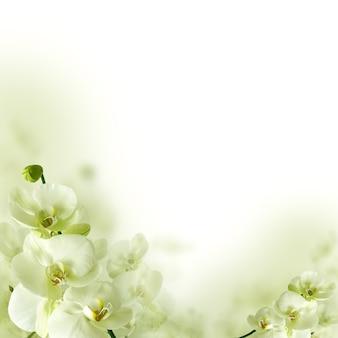 Fleurs d'orchidées et verdure, fond floral de printemps