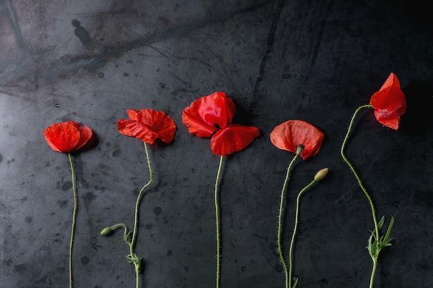Fleurs de pavot rouges