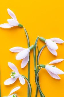 Fleurs de perce-neige fraîches sur fond jaune avec place pour le texte. carte de voeux de printemps. mise à plat.