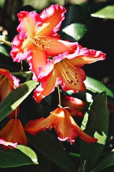 Fleurs pétales orange