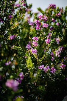 Fleurs à pétales roses
