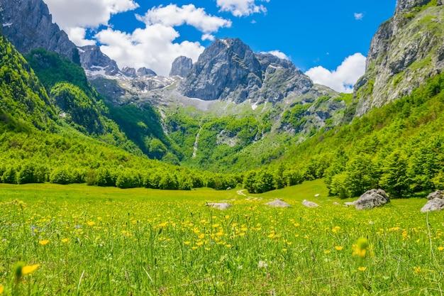 Fleurs pittoresques dans la prairie en haute montagne.