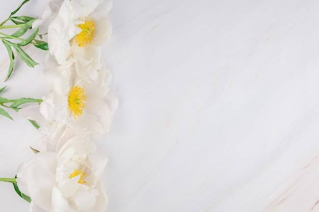Fleurs de pivoine blanche sur fond de marbre