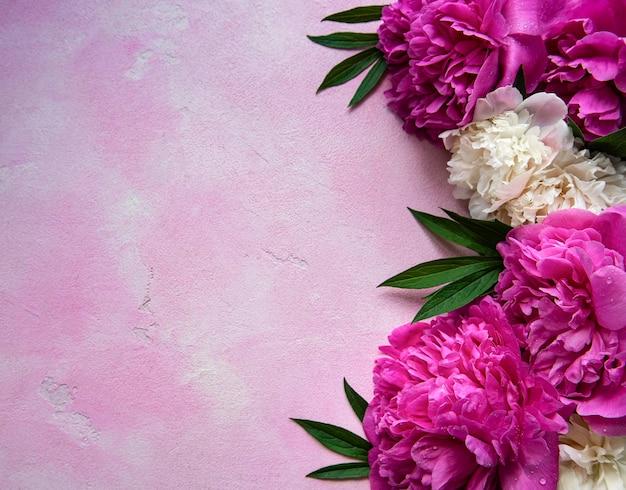 Fleurs de pivoine rose fraîche avec espace copie sur table en béton rose, pose à plat.