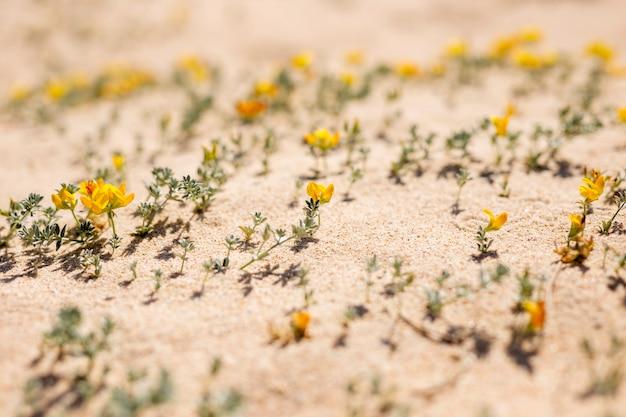 Fleurs sur la plage de sable fin
