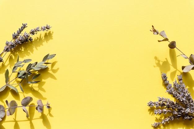 Fleurs et plantes sauvages pressées à sec isolées sur fond jaune.