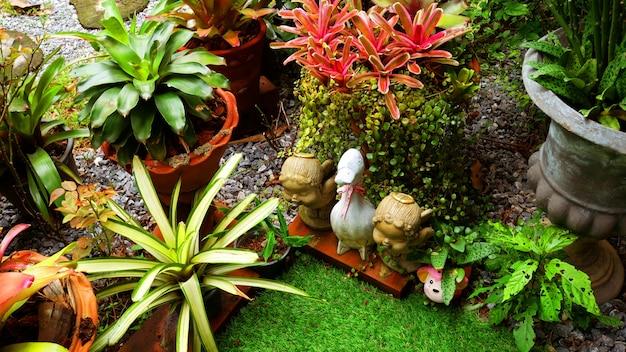 Fleurs et plantes tropicales dans le petit jardin.