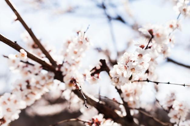 Fleurs en plein air